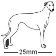 Greyhound Dog Badge White